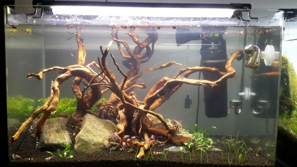 Redesign 38l Aquarium
